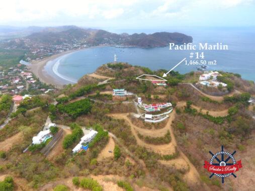 Pacific Marlin #14